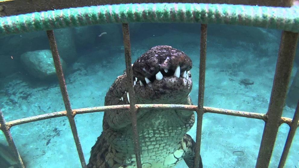 Дайвинг с крокодилом