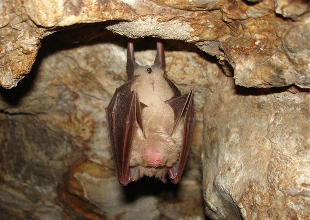 Летучая мышь в Змеиной пещере