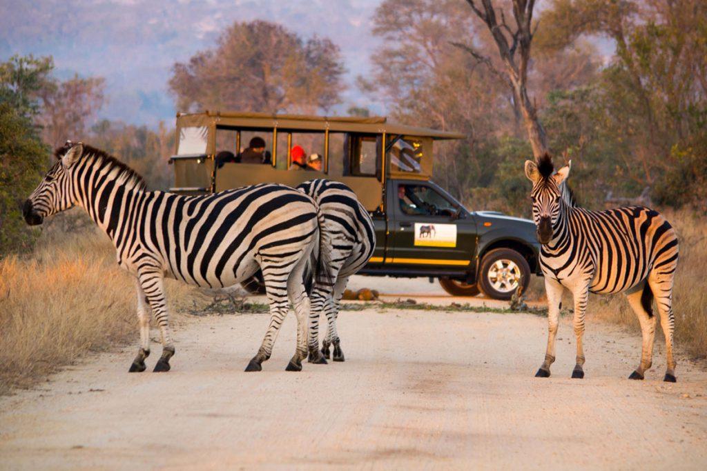 Сафари, ЮАР