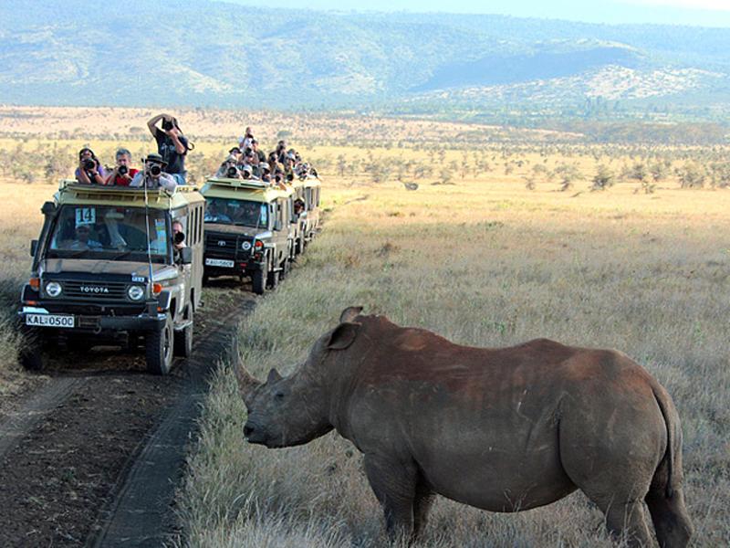 Носорог, сафари, ЮАР