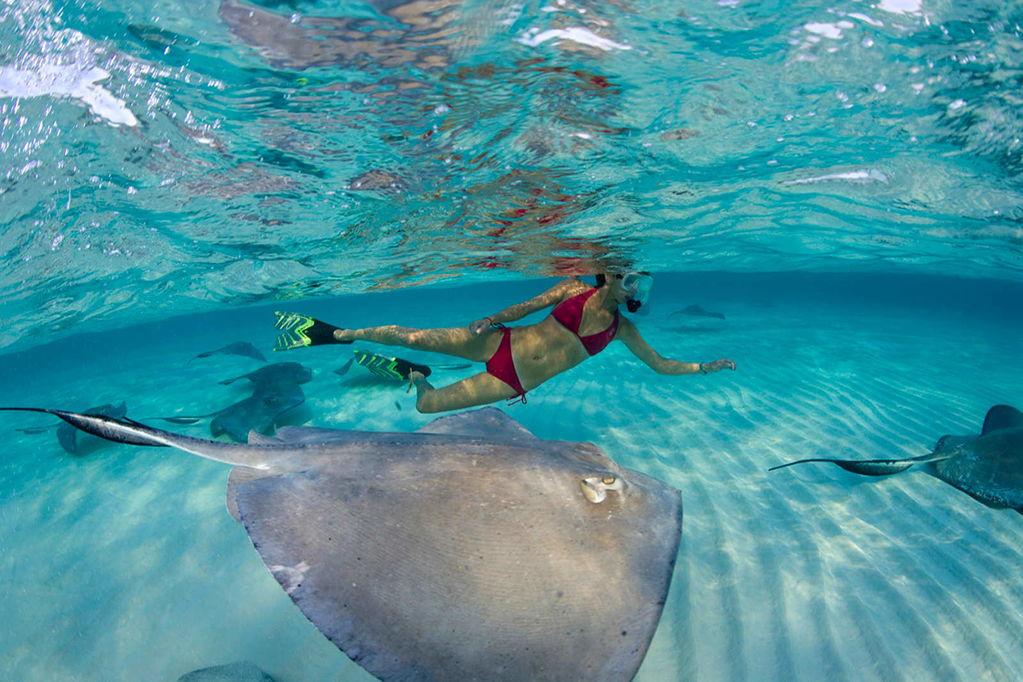 Плаванье со скатами, Каймановы острова