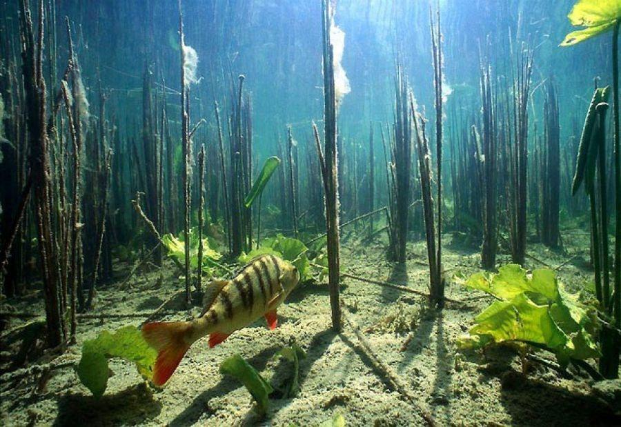 Растения на подводной охоте